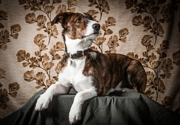 Hund Helmut im Studio