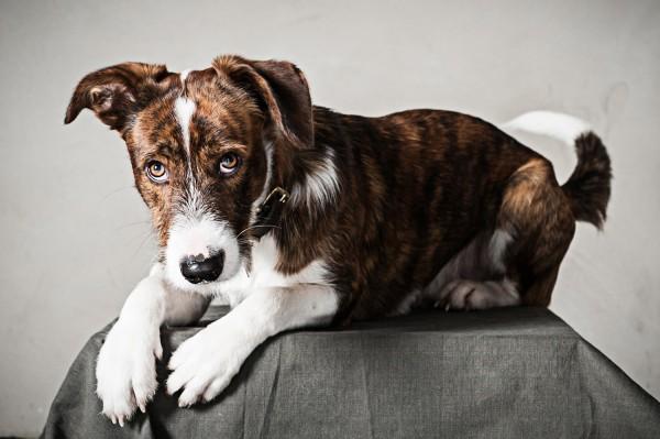 Hundefotografie Tierfotografie