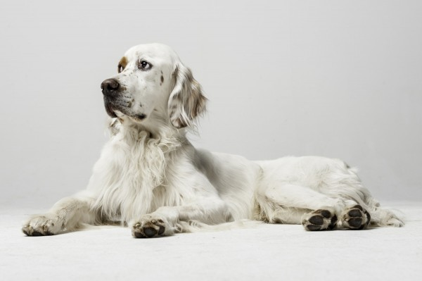 Hundefotografie Tierfotos Hundefoto