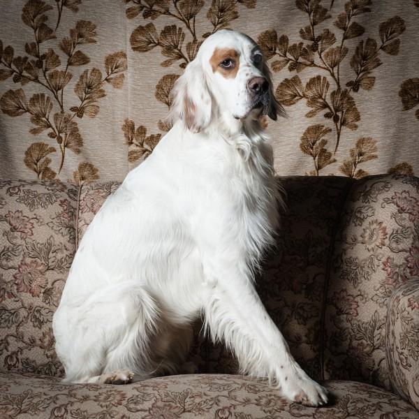 undHerrchenfoto Hundefotos Portrait
