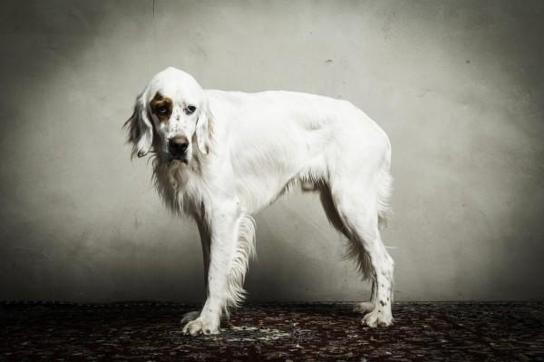 Hundefoto Hundefotografie Tierfotografie