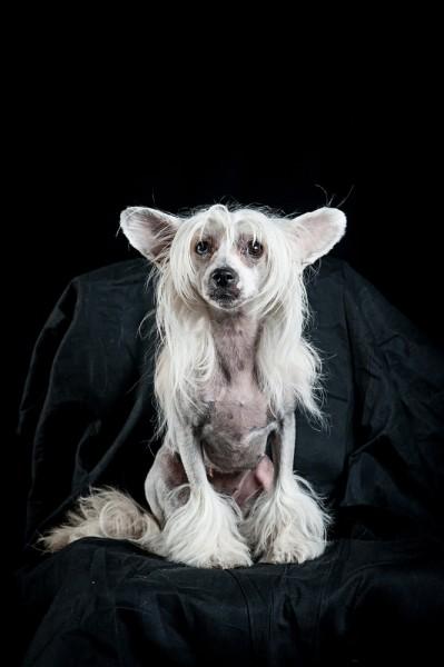 Nackthund Hundefoto Hundefotografie